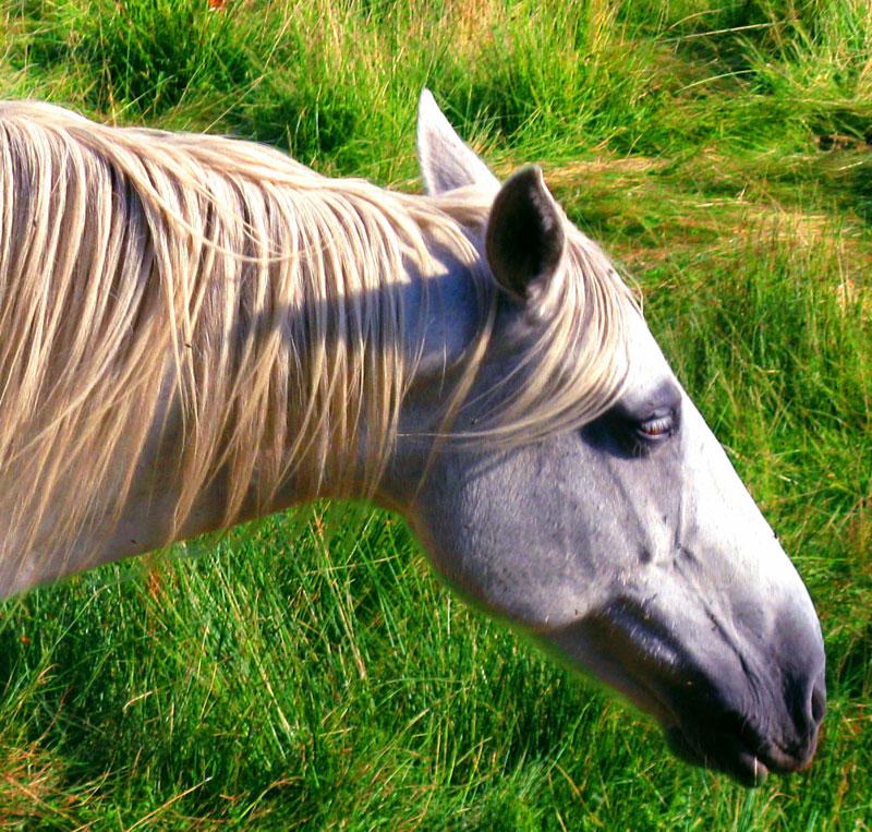 Quelle espèce de cheval? Cheval09